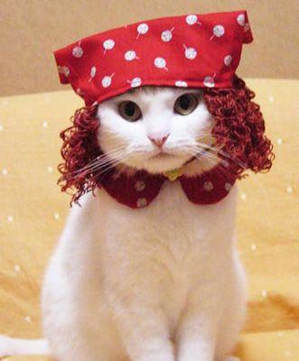 Домашние кошки и котята