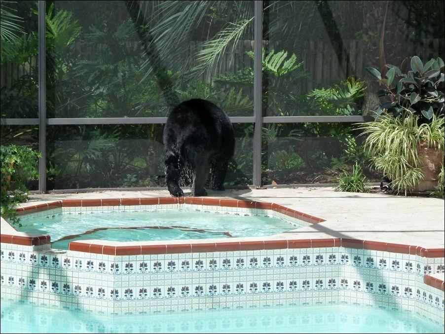 мишка в бассейне